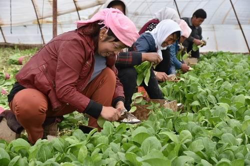 """近年来,湟中按照""""既要确保城市蔬菜副食品有效供应,又要确保农民收入不断增加""""的要求,从""""建基地、调结构、抓市场""""入手,全力抓好""""菜篮子""""产品生产供应工作。"""