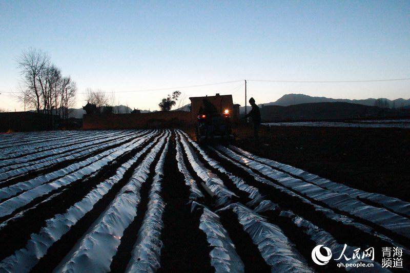 青海民和圆满完成40万亩秋覆膜工作