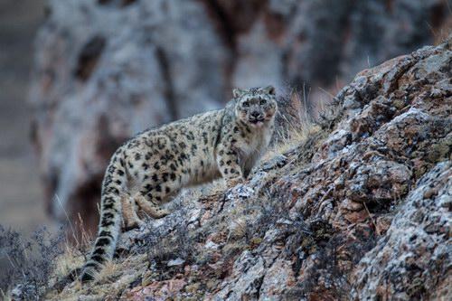 2016青海玉树国际野生动物摄影大赛获奖作品展播