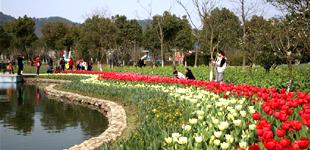西宁人民公园内的郁金香陆续绽放