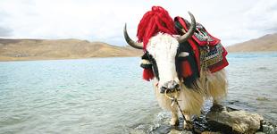 青藏高原:守护生态的安全屏障