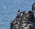 青海湖鸟岛谢客        5月的青海湖鸟岛迎来大量候鸟。为维护周边生态系统,今年旅游季,青海湖鸟岛景区和沙岛景区将停止对外营业。