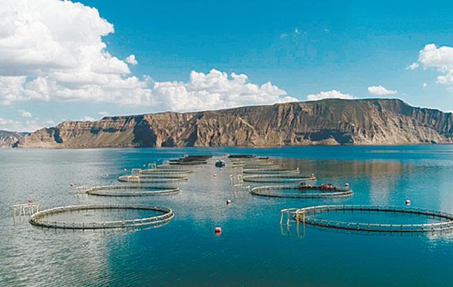 """青海将加快打造""""沿黄流域冷水鱼适度发展产业带""""新格局"""