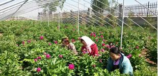 青海省海东市平安区推动富硒产业提档升级